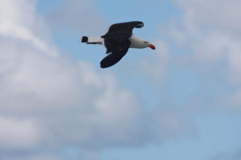 Beautiful bird South Coast Track