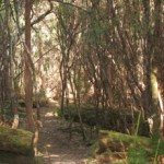 Light forest of Blowhole Valley